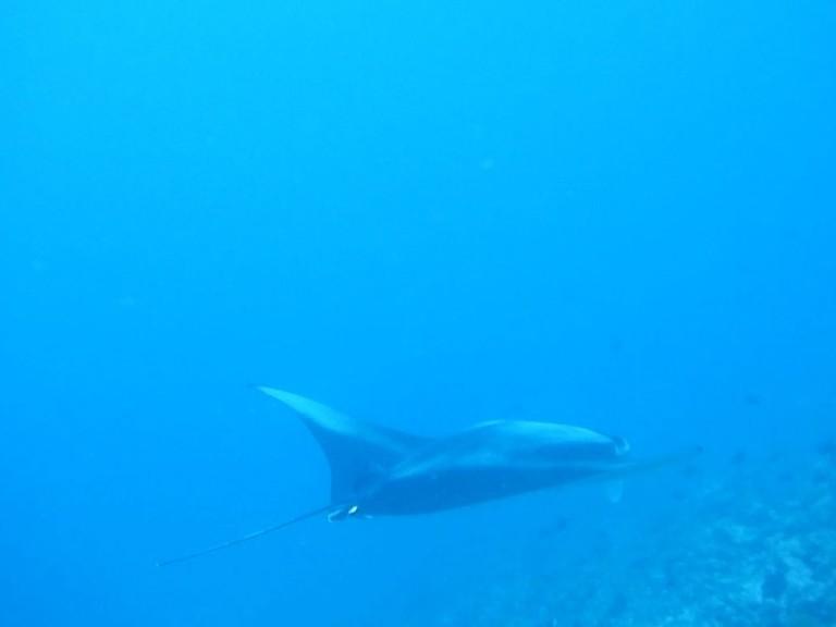 dykkergitte-vid-holder